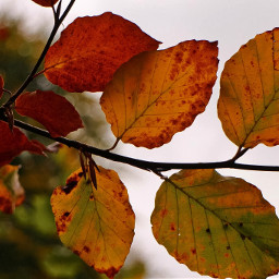 fall leaves art nature photography