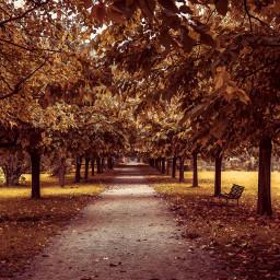 nature autumn freetoedit wppfallcolors