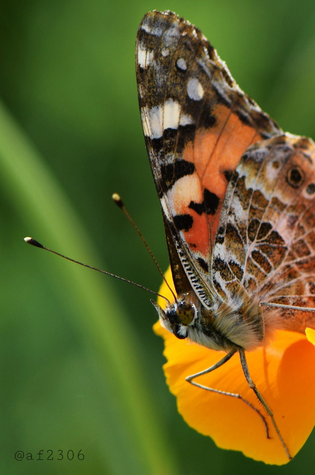 #macro #nature #butterfly