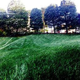 shallowdepthoffield dailyinsperation nature raineffect leaves