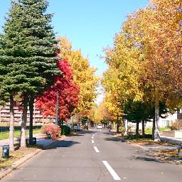 japan hokkaido sapporo colorful autumn