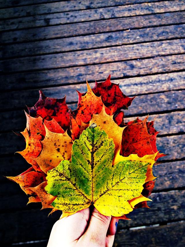 #autumn#art#leaves#colorful#photo #wdpautumn