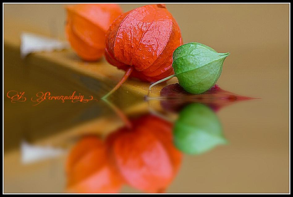 Orange fall) #autumn #orangecolor #orange #flover #nature #color  #colorful #beaytiful #macro