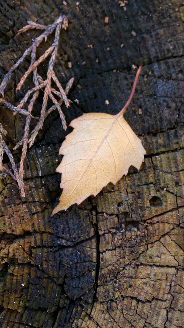 #freetoedit  If U want... 😉🙋👍 #emotions #noedit  #nature #photography #autumn #leaf