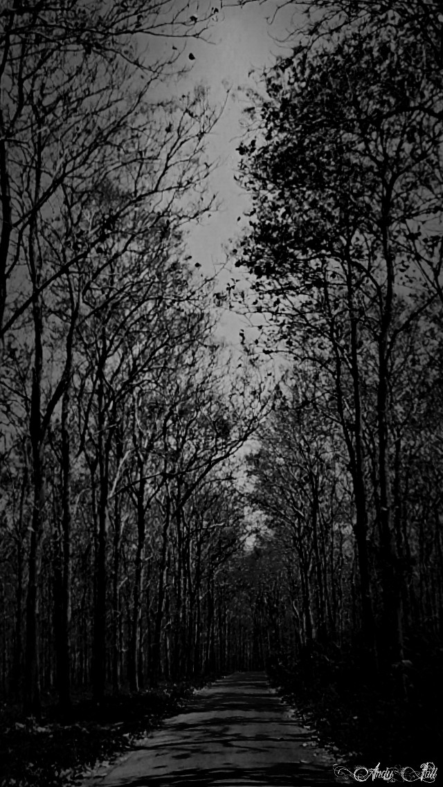 Walk alone.,.   #blackandwhite #nature #forest