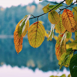 nature autumn autumnleaves focus