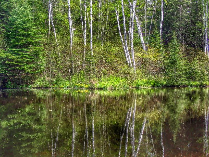 Spring birch trees in Michigan's Upper Peninsula #spring #trees #nature #freetoedit #lake @pa