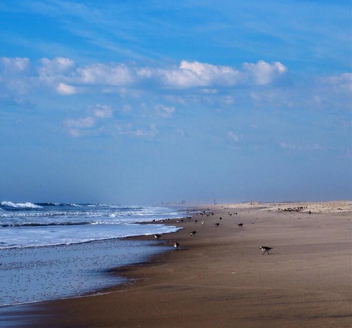 Good morning dear friends! Happy new week to all!😄☀️☕️😄☀️☕️ #sea #birds #interesting #travel #beach