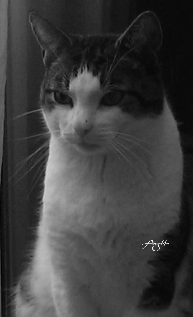 My beautiful cat!