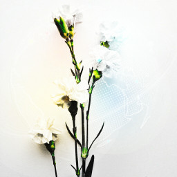 white freetoedit flower