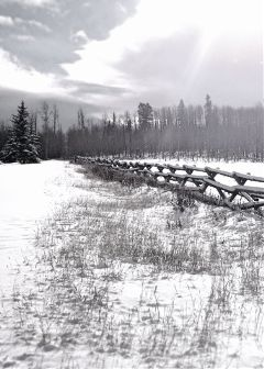 cold winter snow nature bw