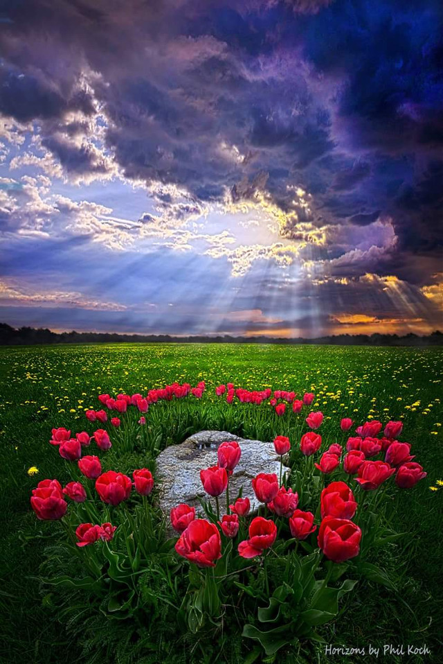 Horizons by Phil Koch.  #RedAndGreen #peace #sunrise #seasons #photography #colorful #emotions #thankful #flower