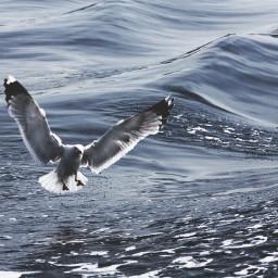 wppanimals albatraoz interesting beach nature