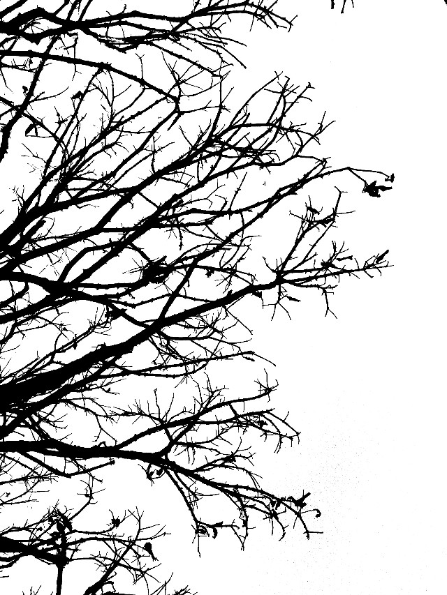 Strange things did happen here, no stranger would it be If we met at midnight in the hanging tree. #tree #photography #art