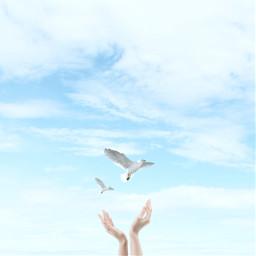 freetoedit cloud minimal bird madewithpicsart