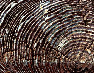 texture wood nature closeup hdr