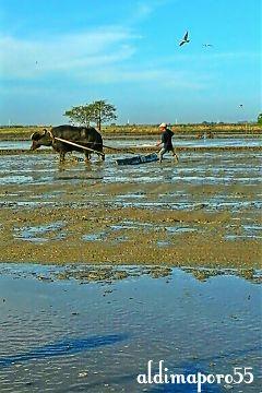photography nature farm animal farmer