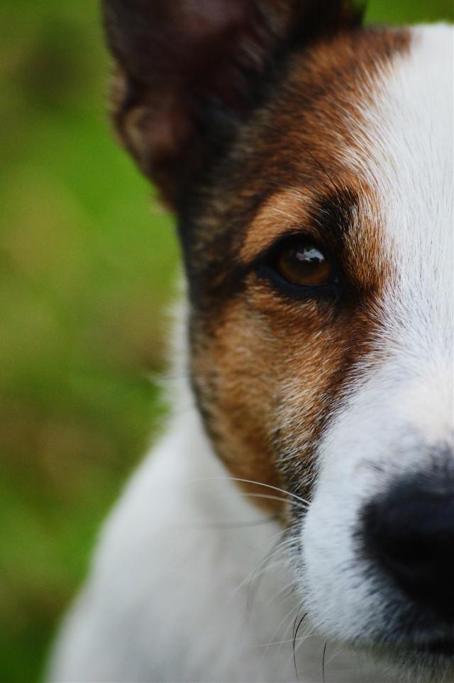 finally posting again😄 #dog #petsandanimals  #eye #colorful  #closeup #photography