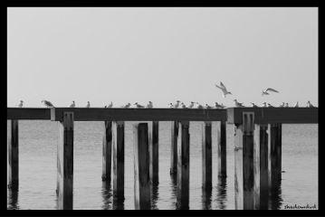 photography blackandwhite sea silence birds