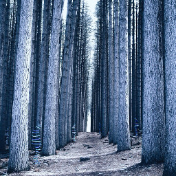 stripes vanishingpoint forest cold wintet