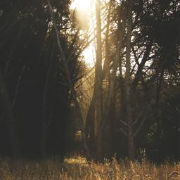 nature photography woods tree light