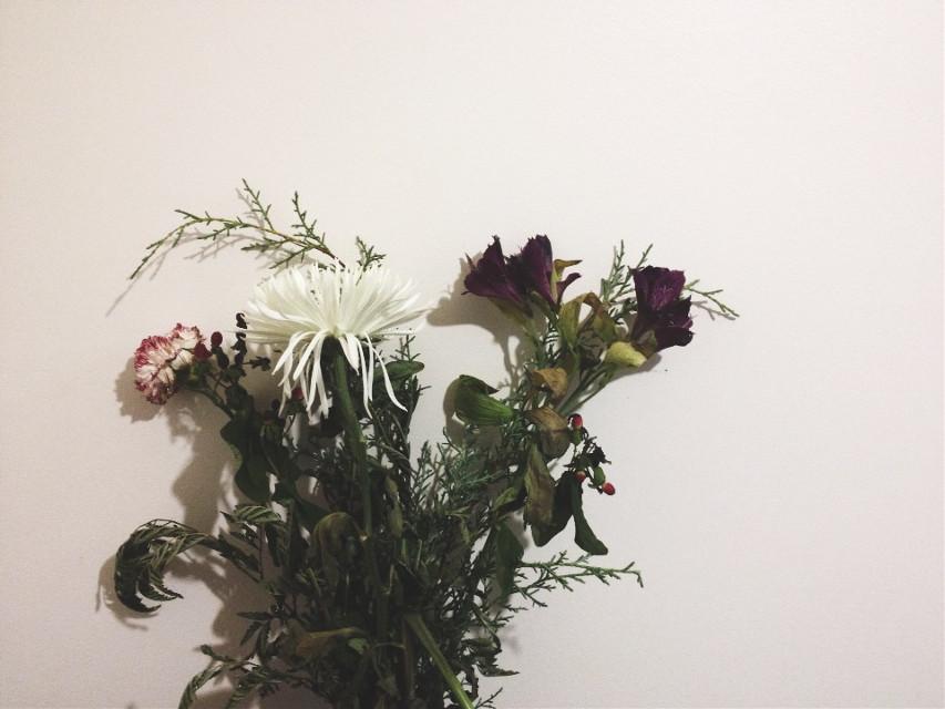 By: jngsyj    you'll just die like flowers    #floral #edit #interesting