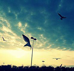 crisp bird nature midair sky