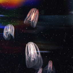 aquarium jellyfish bokeheffect