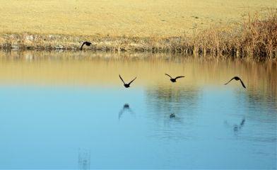 morning birds wildlife nature