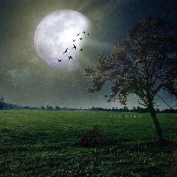 ftestarrynight undefined shapecrop dark moon