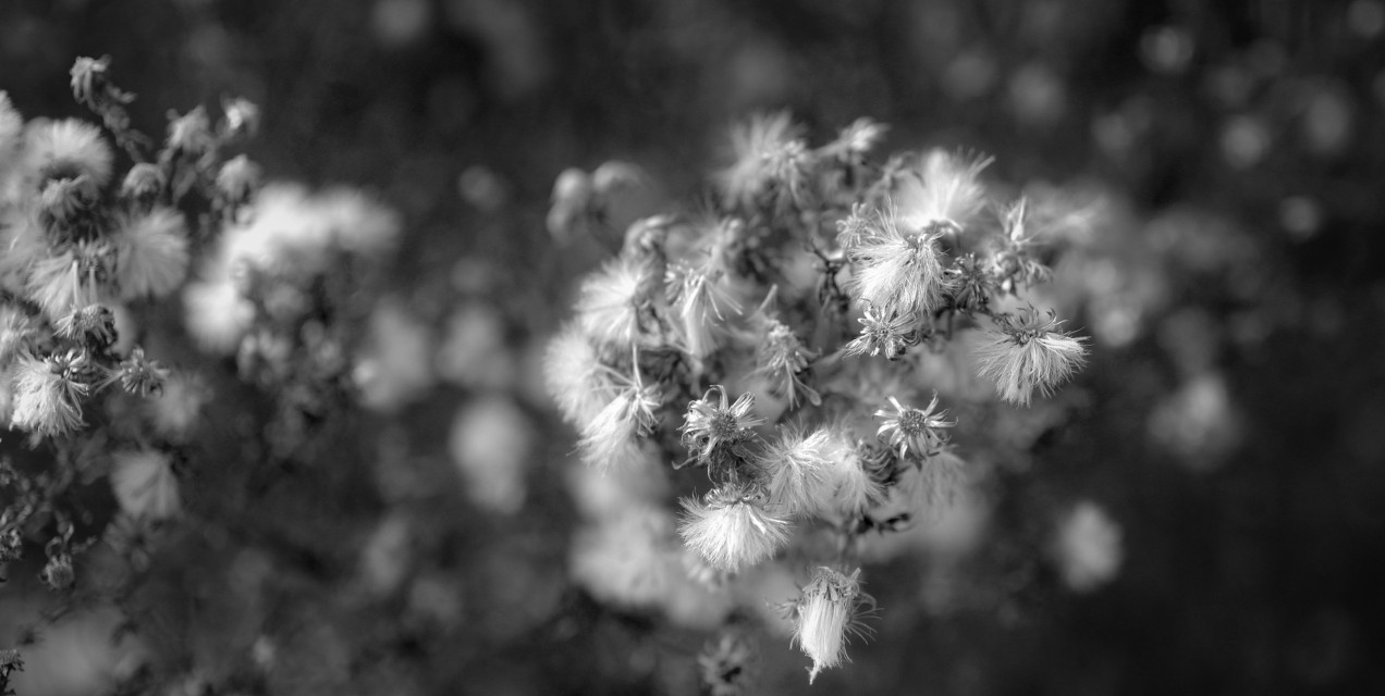 Galaxy At My Side #Dots  #blackandwhite  #macro  #closeup  #plant  #bloom #blossom  #winter  #repeating  #pretty  #photography  #artistic
