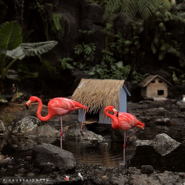 #flamingo   #nature #photography #petsandanimals   #travel