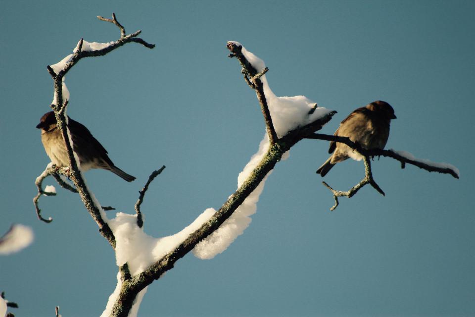 #snow #birds #winter