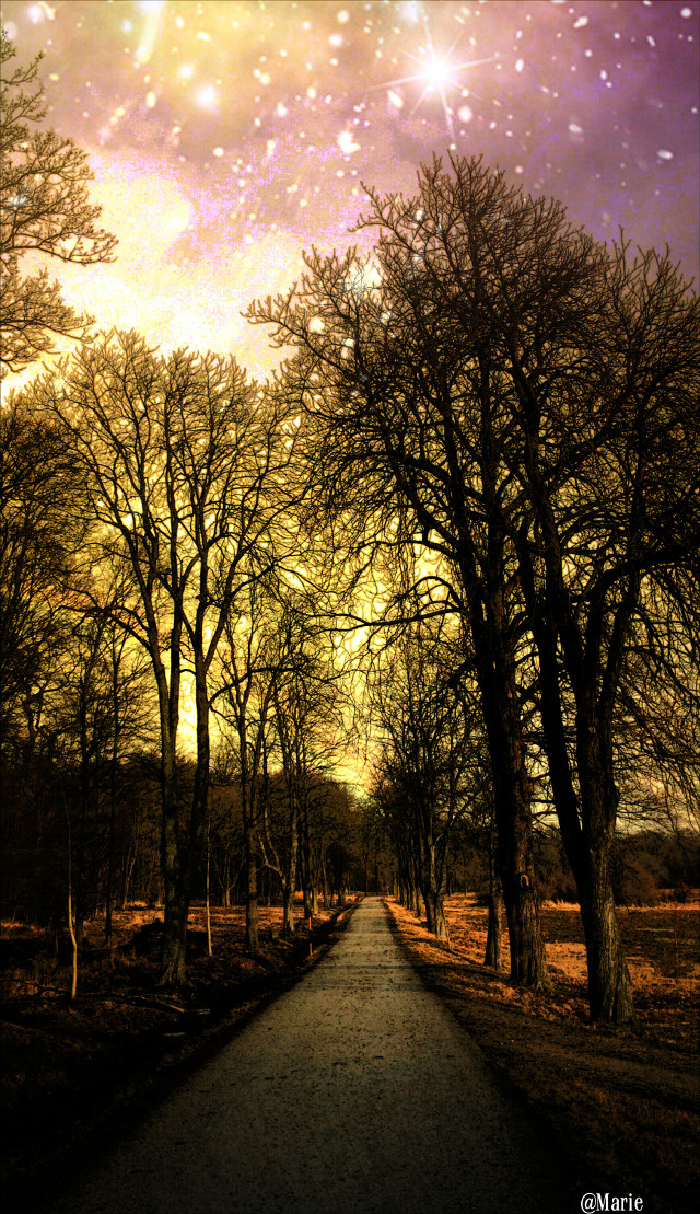 My edition for  @araled1  #freetoedit  #pathway #tree  #space