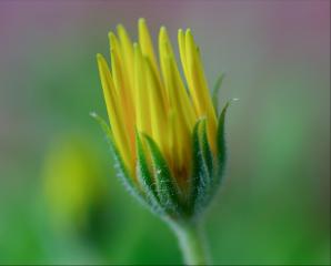 macro macroflower macro_flower closeup flower