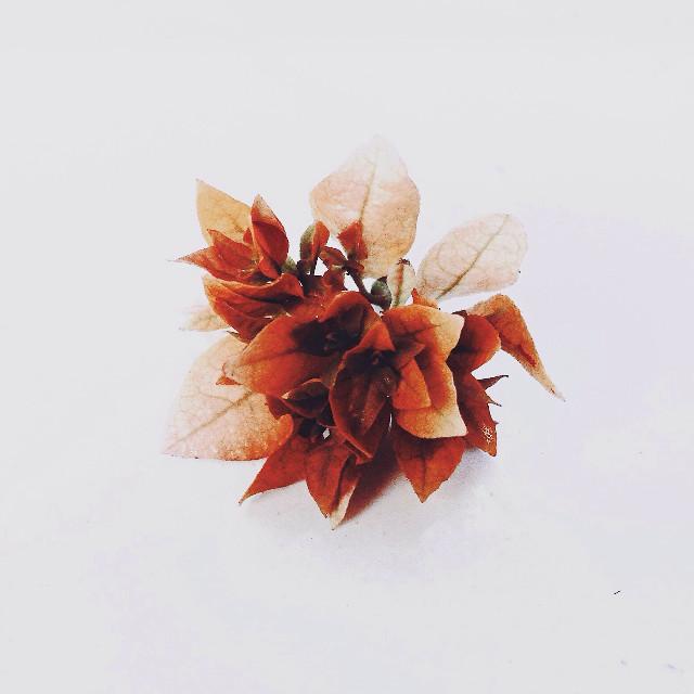 #orange #flower