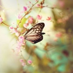 butterfly goodday