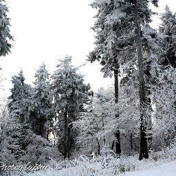 winter forest photography itgoeson