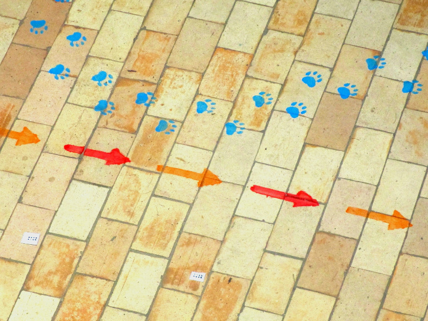 #original  #photography  #colors  #orange  #blue  #red  #pattern  #lines  #stripes  #forms  #arrows  #steps  #fun  #school  #floor  #oldpic  #my  #shot  #noedit  #noeffect  #nofilter  #PicsArt  #loveit
