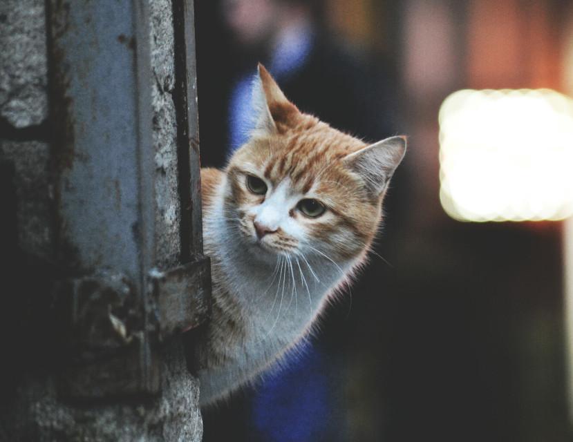 #cat  #cute  #anime  #petsandanimals  #funny