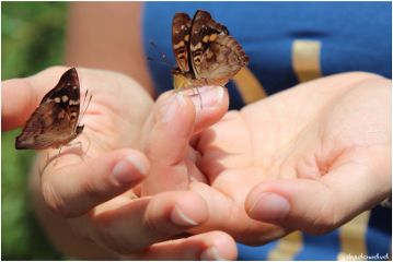 photography travel argentina butterfly hands