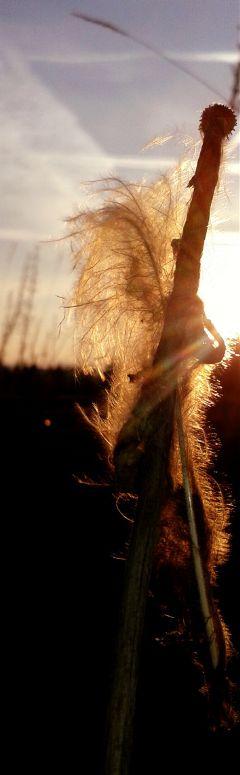 feather sun