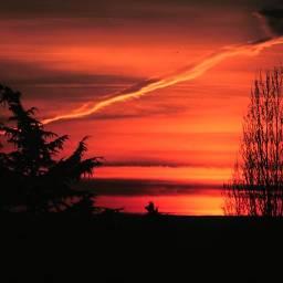FreeToEdit sunset evening nature tree trees sky clouds