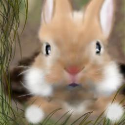 wdpbunny drawing dcbunny bunny mydrawing
