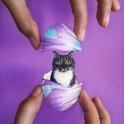 cat edited wapdecorateeggs edit madewithpicsart