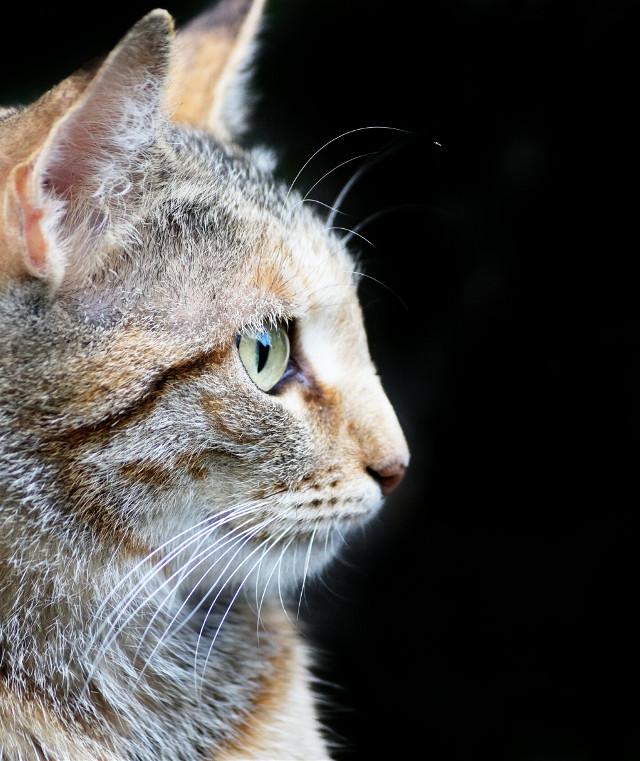 A cat #cat #petsandanimals #nature #eye