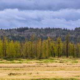 getoutside treelines thirds texture greyskies