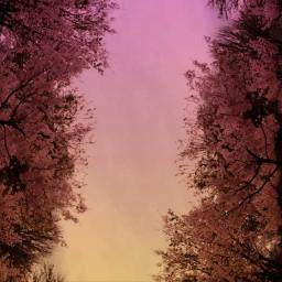 doubleexposure spring trees freetoedit