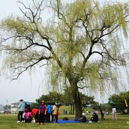 picnic tree park nature freetoedit