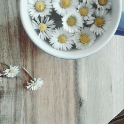 flowers daisy cup cupofflowers playwithyourfood
